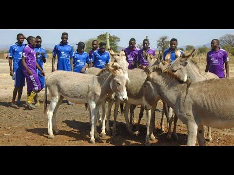 Kicken für die Esel