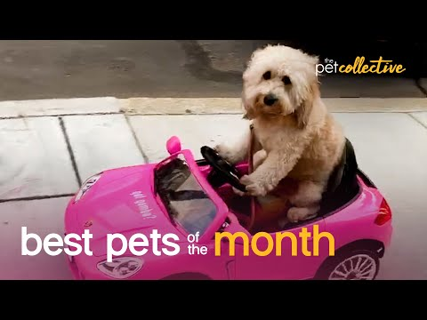 Best Pets of the Month (September 2020)   The Pet Collective