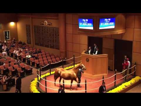 Love the Chase Hip 59