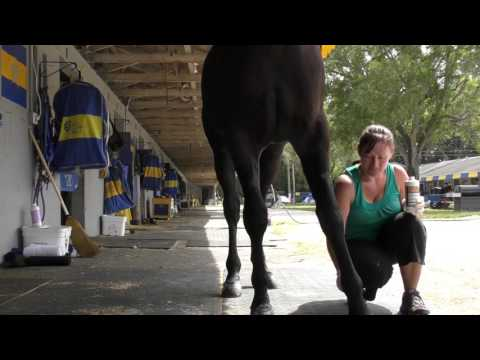 Tack to Track presented by Jacks - How to paint Legs, knees and hocks