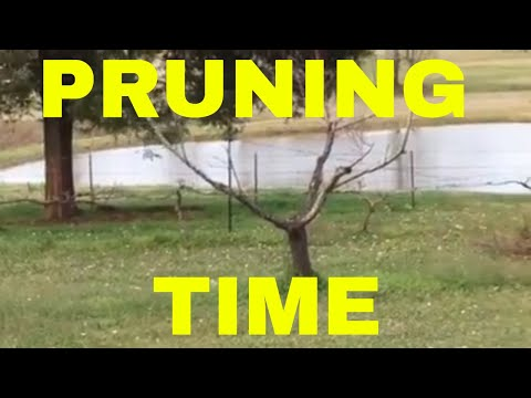 Farm Talk- PRUNING GRAPES and FRUIT TREES