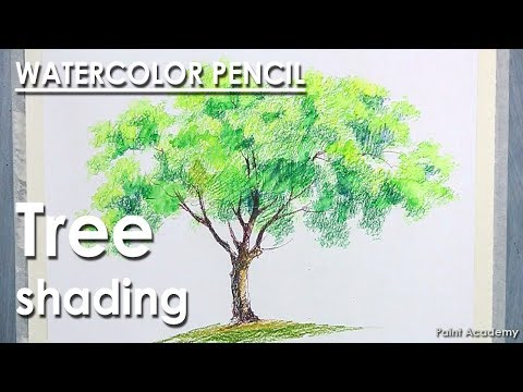 Watercolor Pencil : How to Draw Tree and shading step by step