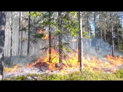 Naturvårdsbränning i Sjulsmyrans naturreservat 2015