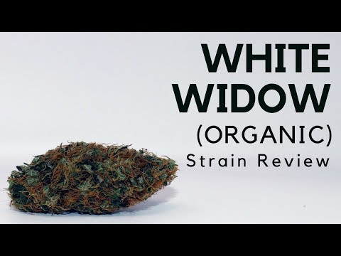 White Widow [Organic] Cannabis Strain Information & Review