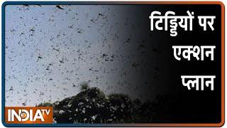 Locust Attack In India: टिड्डी दल के हमले की आशंका पर अलर्ट, बनाया गया कंट्रोल रूम   IndiaTV News - INDIATV