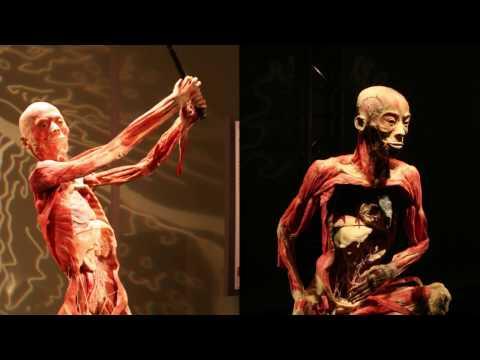 Science Museum Oklahoma presents 'Bodies Revealed'