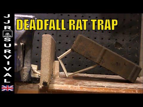 How to set a deadfall rat trap