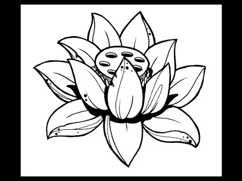Lotus flower mp3 gallery flower decoration ideas download youtube to mp3 how to draw a lotus flower by download youtube to mp3 how mightylinksfo
