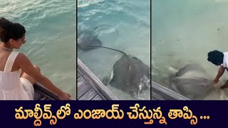 Actress Taapsee Pannu Vacation at Maldives | #VacationMode | IndiaGlitz Telugu - IGTELUGU