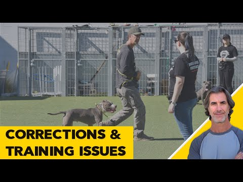 Dog Training and Correcting Issues - Robert Cabral ask me anything