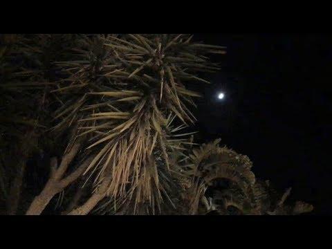 Sharing Joy Under a Sicilian Moon