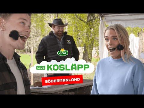 Digitalt Kosläpp på Arlagård i Södermanland
