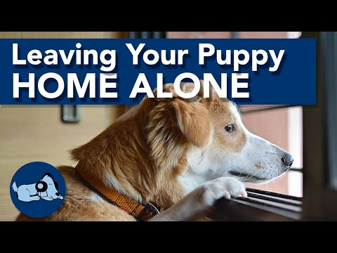 How to Leave a Puppy Home Alone!