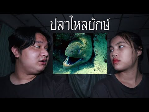 พวกเราซื้อ-ปลาไหลยักษ์-มาจาก-D