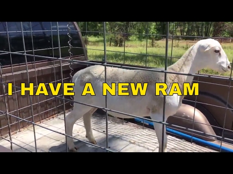 I HAVE A NEW RAM
