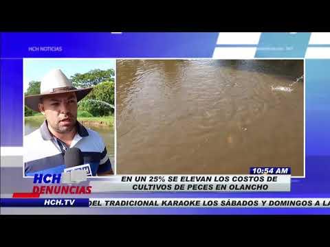 En un 25% se disparan costos de insumos para Cultivo de Peces en Olancho