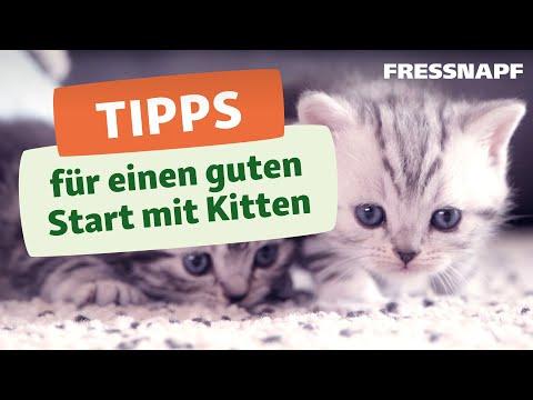 Alles für Kitten!