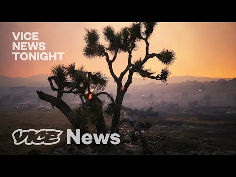 Joshua Trees Are Being Wiped Out by Climate Change — Can They Be Saved?