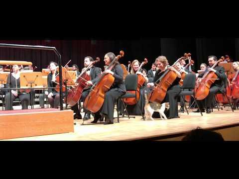 Video: Katinas per orkestro  - koncertą Stambule