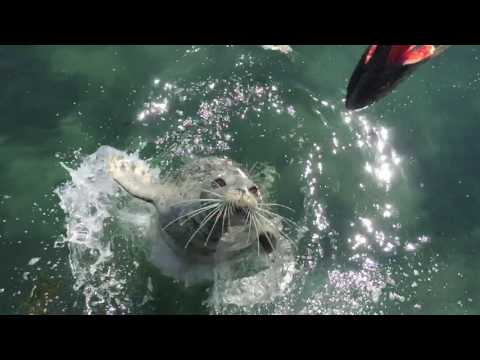 Don't feed the Wild seal