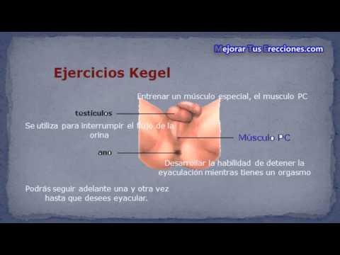 ejercicios kegel ereccion