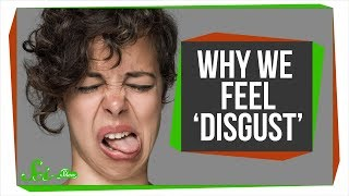 Why Humans Feel Disgust, and Why Other Animals Might Too