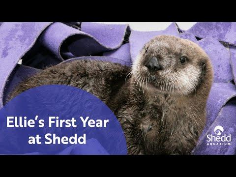 Ellie's First Year at Shedd