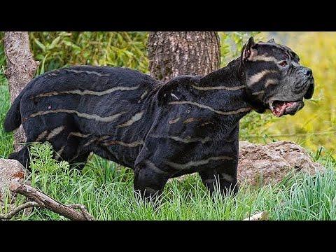 Самые Запрещённые Породы Собак В Мире
