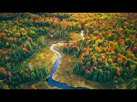 Man and Dog in the Wild | Canada in Fall by Drone | Roast Duck on a Campfire