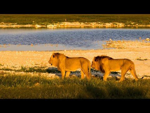 Etosha National Park, Namibia in 4K Ultra HD