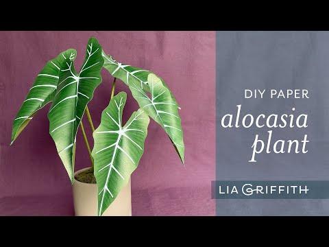 DIY Paper Alocasia Plant