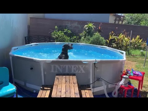 Dog Splashes Water in the Pool - 1133227-1