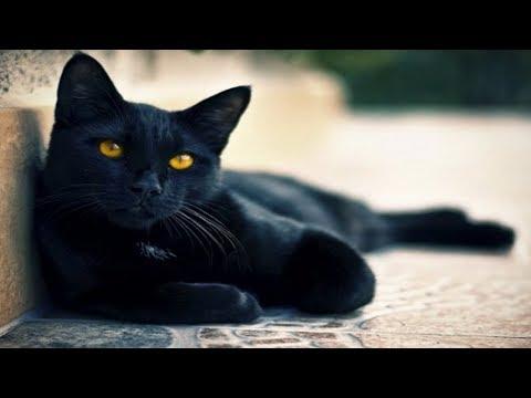 Заговор на кота или кошку для денег и удачи. А у тебя есть кот? photo