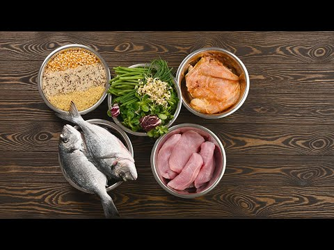 5 Reasons to Start Making Dog Food at Home