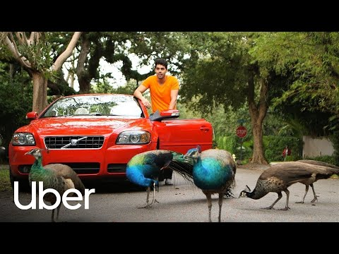 Moving Florida | Uber Florida