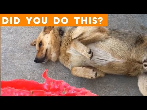 Guiltiest Dogs Ever September Compilation 2018 | Funny Pet Videos