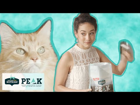 Things You Do Your Cat Finds Heroic // Presented By BuzzFeed & Nutrish For Cats