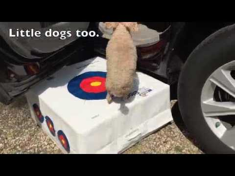 Help dogs in and out of the car with a lightweight target