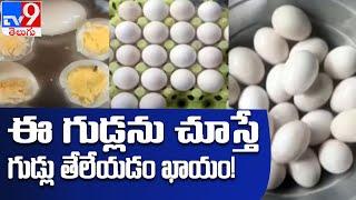 Nellore : నేలకేసి కొట్టినా పగలని కోడి గుడ్లు - TV9 - TV9