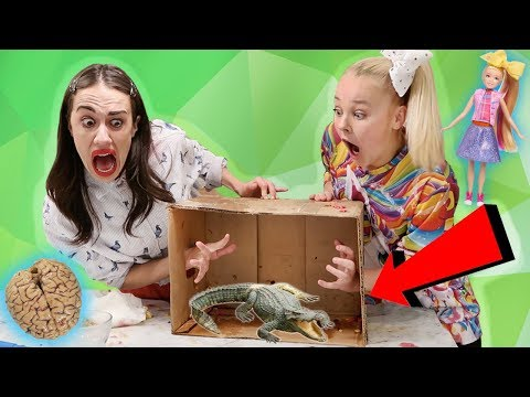 connectYoutube - WHAT'S IN THE BOX CHALLENGE W/ MIRANDA SINGS!! *live animals*