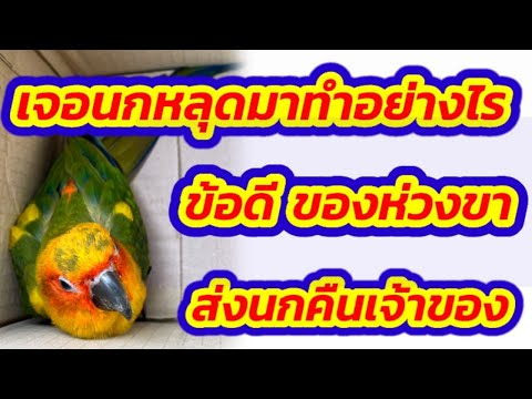 #เจอนกหลุด-#ส่งนกคืนเจ้าของ-#ว