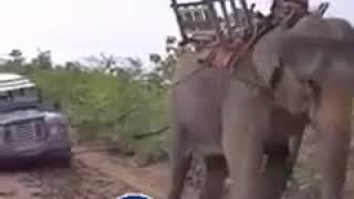 شاهد .. فيل يسحب سيارة مغرزة في الطين