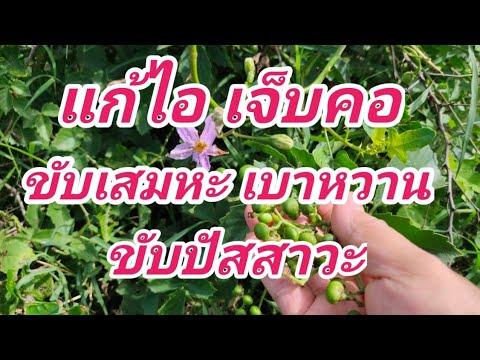 สมุนไพรไทย-สรรพคุณ-แก้ไอ-แก้เจ