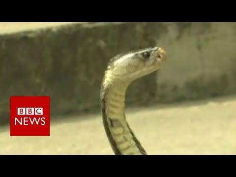 Thai survival training: Drinking cobra blood in the jungle - BBC News