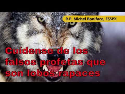 Cuídense de los falsos profetas que son lobos rapaces