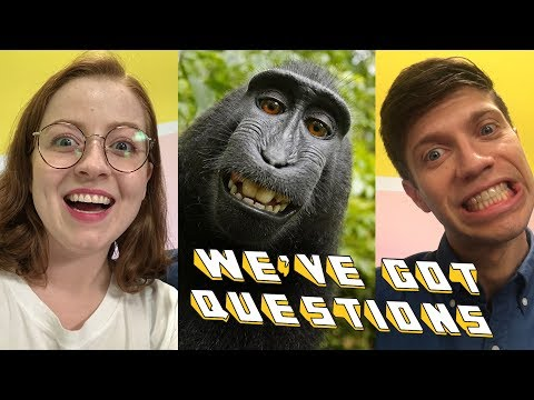 How Can a Monkey Ruin a Man's Life? | We've Got Questions