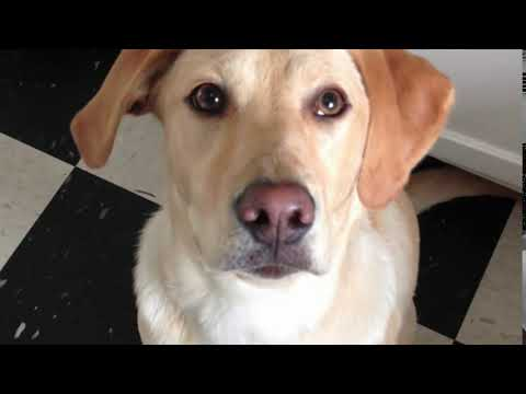 connectYoutube - Ultimate Dog Trick - Cross eyes on command