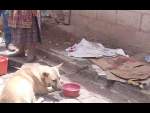 Crueldad animal en Chimaltenango: siete perros envenenados