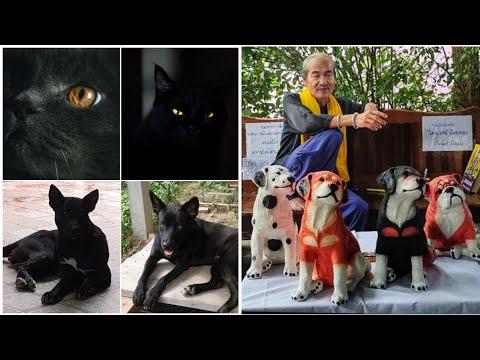 อาถรรพ์หมาแมวดำ!เปิดตำนานความเ