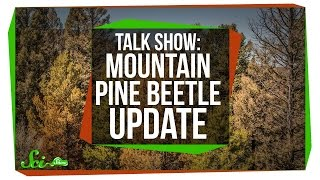 Mountain Pine Beetle Update: SciShow Talk Show